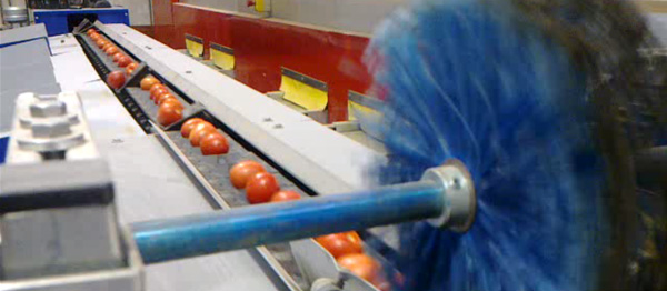 Calibrador de Tomate
